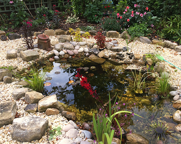 Pond flourishing